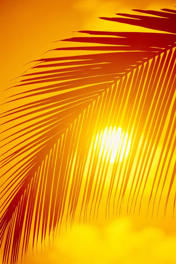 Good Morning Sunshine Ron Kristy : Benefits of feeling the sun on your skin good